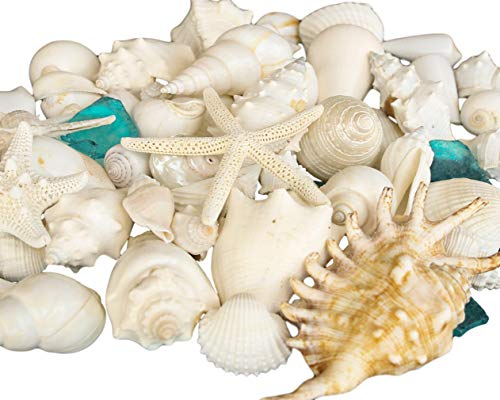 Tumbler Home Mix of Seashells with Sea Glass - Set Includes White Shells up to 4 inches - Home Decor, Wedding, Christmas, Craft- Luxury Sea Shell Mix